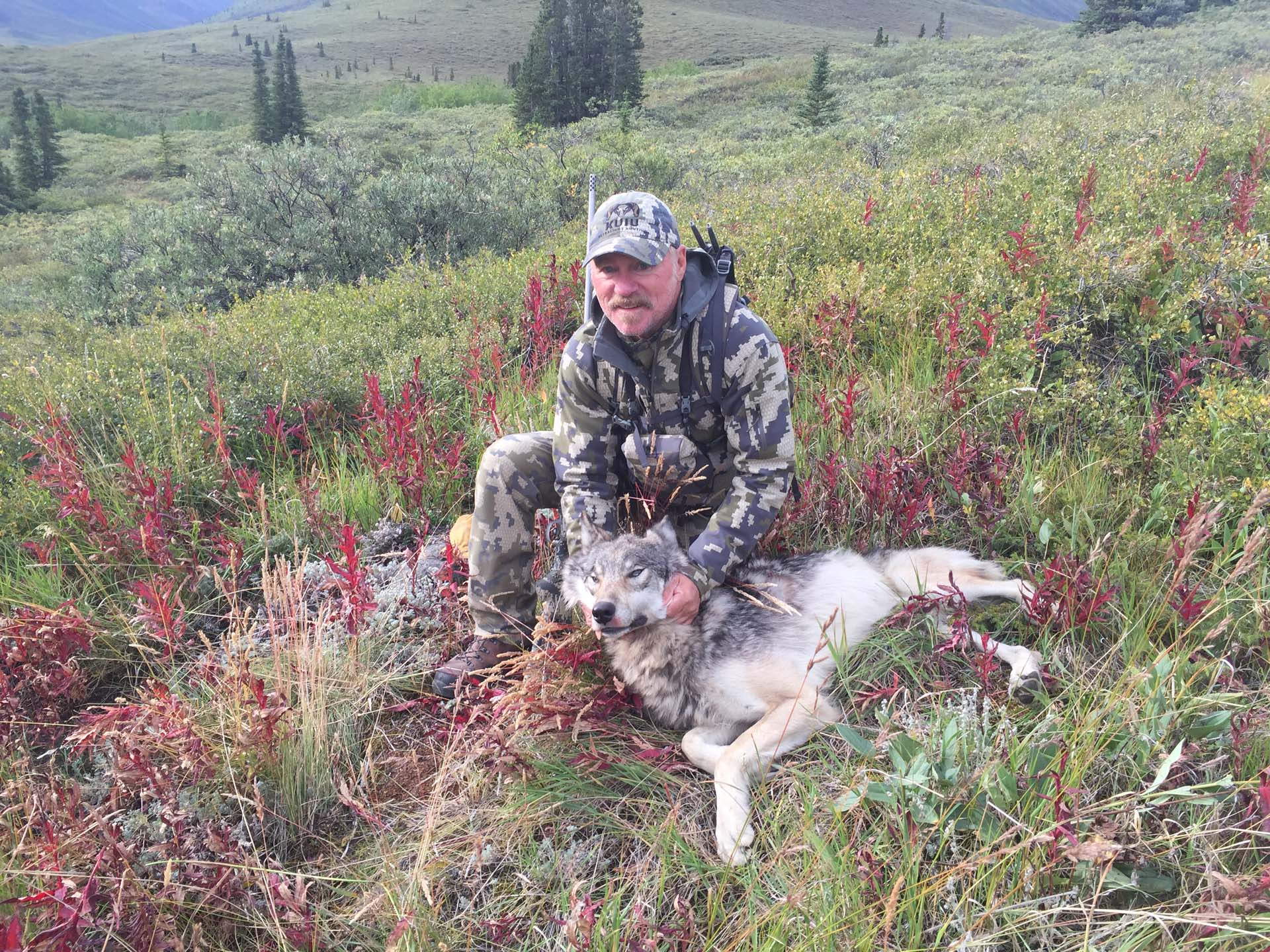 Hunting for other species in the Yukon - wolf, black bear, wolverine