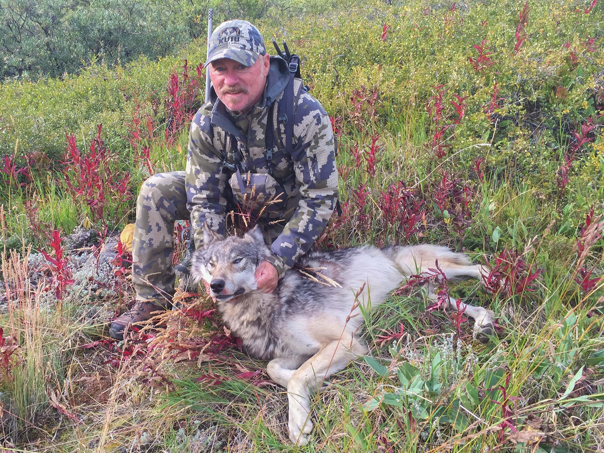 Yukon Wolf Hunting
